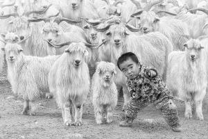 PSA Gold Medal - Hiu Wan Yeung (Hong Kong)The Little Shepherd