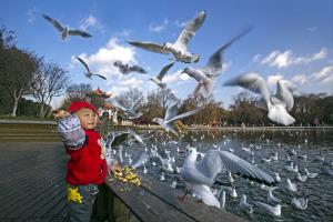 KBIPA Merit Award - Hiu Wan Yeung (Hong Kong)Feed Sea Gulls