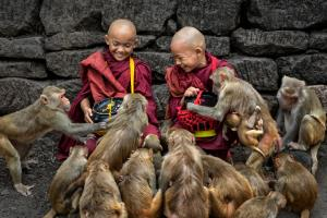 PhotoVivo Silver Medal - Eu Kwok-Hoong Vincent (Singapore)Feeding The Monkeys