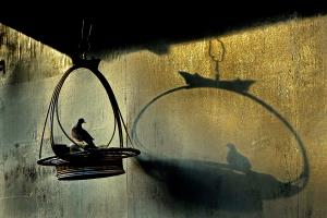 PhotoVivo Gold Medal - Wee Huei Koh (Malaysia)Birdcage's Shadow