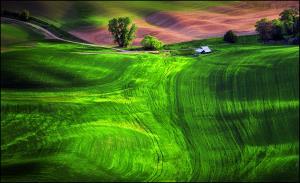 KBIPA Merit Award - Miranda Siu (Canada)Farmhouse On Rolling Green
