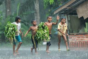 RPS Gold Medal - Siew Thong Chu (Malaysia)Happy Rain
