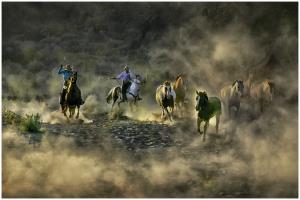 KBIPA Silver Medal - Thomas Lang (USA)Horse Drive 08-02