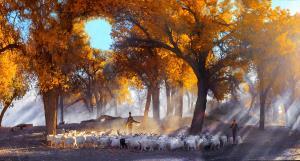 KBIPA Merit Award - Shenglin Hu (China)Shepherd Song