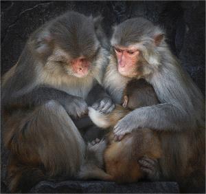 IUP Silver Medal - Yi Wan (China)  Monkey 64