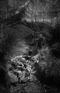 KBIPC Merit Award - Feng Ni (China)  The Daily Life In The Mountains 10
