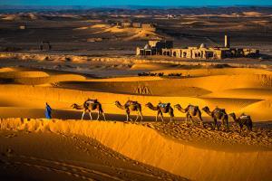 KBIPC Merit Award - Huiqian Yang (China)  Camels In Desert