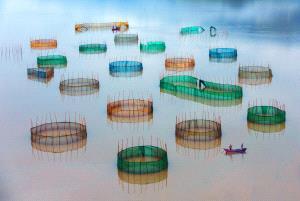 KBIPC Merit Award - Binyuan Li (China)  Encircle A City At Sea