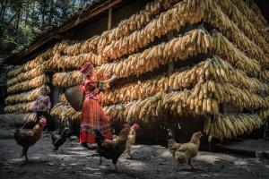 IUP Honor Mention - Yong Xue (China)  Pick Maizes