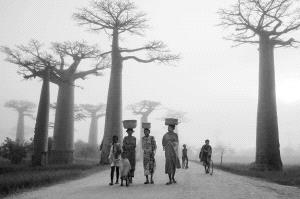 KBIPC Merit Award - Xunlei Li (China)  Baobab Road