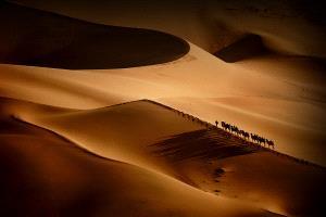 PhotoVivo Honor Mention - Shihui Liu (China)  Camels Ring