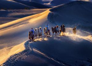 KBIPC Gold Medal - Wei Zeng (China)  Desert Camel Team 1