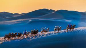 KBIPC Merit Award - Wei Zeng (China)  Desert Camel Team 3