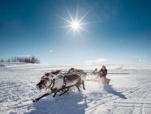 PSA HM Ribbons - Alexey Suloev (Russian Federation)  Racing On The Reindeer-Yamal