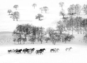 KBIPC Merit Award - Zhong Chen (China)  Strolling In Snow Bw