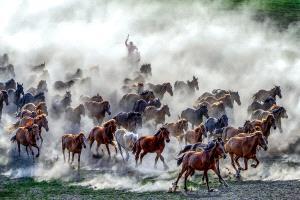 PhotoVivo Honor Mention - Zhong Chen (China)  Horses Galloping 2