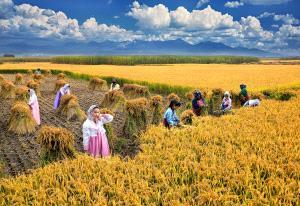 KBIPC Merit Award - Ling Hou (China)  Autumn Harvest