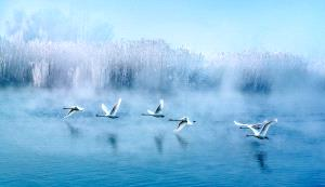 KBIPC Merit Award - Ruixiang Jiang (China)  Charming Flying