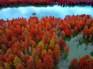 PhotoVivo Bronze Medal - Hui Wang (China)  Red Forest 2