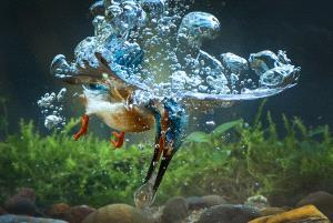 PhotoVivo Gold Medal - Lishu Shu (China)  Fatal Blow