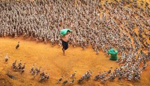 KBIPC Gold Medal - Xiqing Liu (China)  Ducks