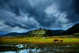 KBIPC Gold Medal - Weidong Zhong (China)  Charm Grassland