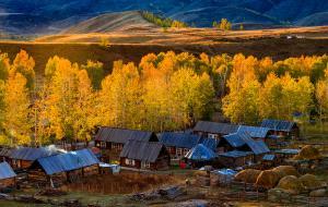 PSA HM Ribbons - Ying Xie (China)  Baihaba Autumn