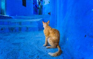PhotoVivo Gold Medal - Haojiang Huang (China)  Cat Surrounded By Blue
