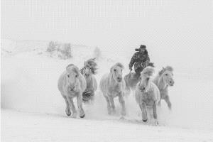 PhotoVivo Honor Mention e-certificate - Dingfeng Zheng (China)  Horses Running 2
