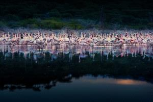 PhotoVivo Gold Medal - Yan Liu (China)  Gather