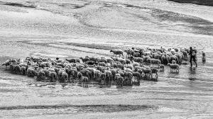 APAS Honor Mention e-certificate - Kung Ko Kuo (Taiwan)  Shepherd On The Shoal With His Flock