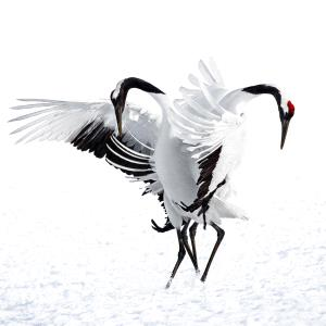 KBIPC Merit Award e-certificate - Jing Li (China)  Red-Crowned Crane 2