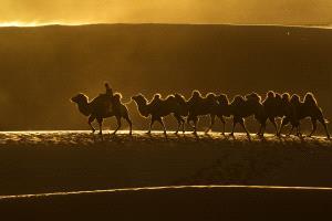 PhotoVivo Gold Medal - Jilahadalai Qi (China)  Forward West