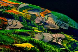 PhotoVivo Honor Mention e-certificate - Tong Hu (China)  Colorful Earth