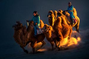 PhotoVivo Gold Medal - Xueping Cui (China)  Running Camels