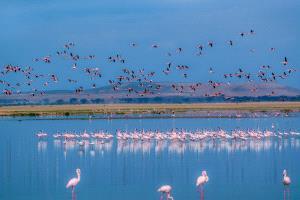 PhotoVivo Gold Medal - Yongping Shao (China)  Flamingos Paradise