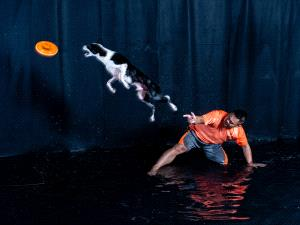 KBIPC Merit Award e-certificate - Lilo Chen (Taiwan)  Dog Chasing Frisbee