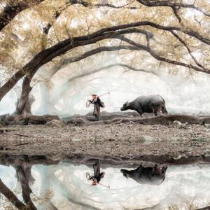PhotoVivo Gold Medal - Jie Fischer (USA)  Spring Herding