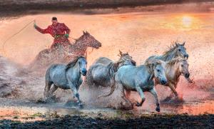 ICPE Gold Medal - Wendy Wai Man Lam (Hong Kong)  Running Horses At Sunrise