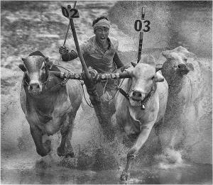 PhotoVivo Gold Medal - Van Nhi Duong (Vietnam)  Chien Thang