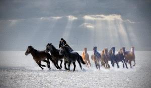 PhotoVivo Gold Medal - Hugo Chan (USA)  Horse Looping 4